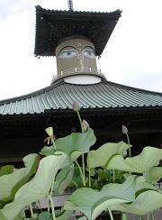 蓮花の浄土 萩生寺